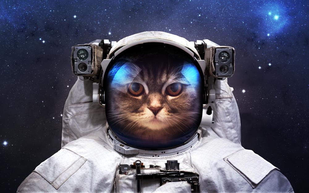 Candidature : Poste De Chaton Astronaute
